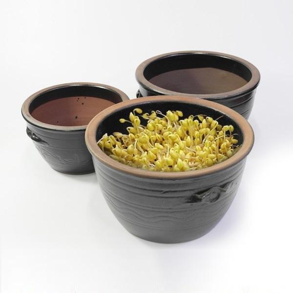옹기 콩나물시루 소 직접키우는 콩나물재배